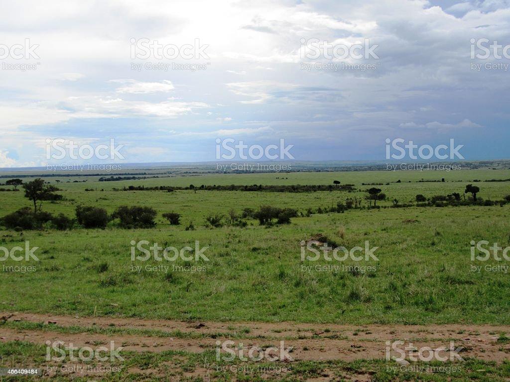 Safari in der Masai Mara - Kenia stock photo
