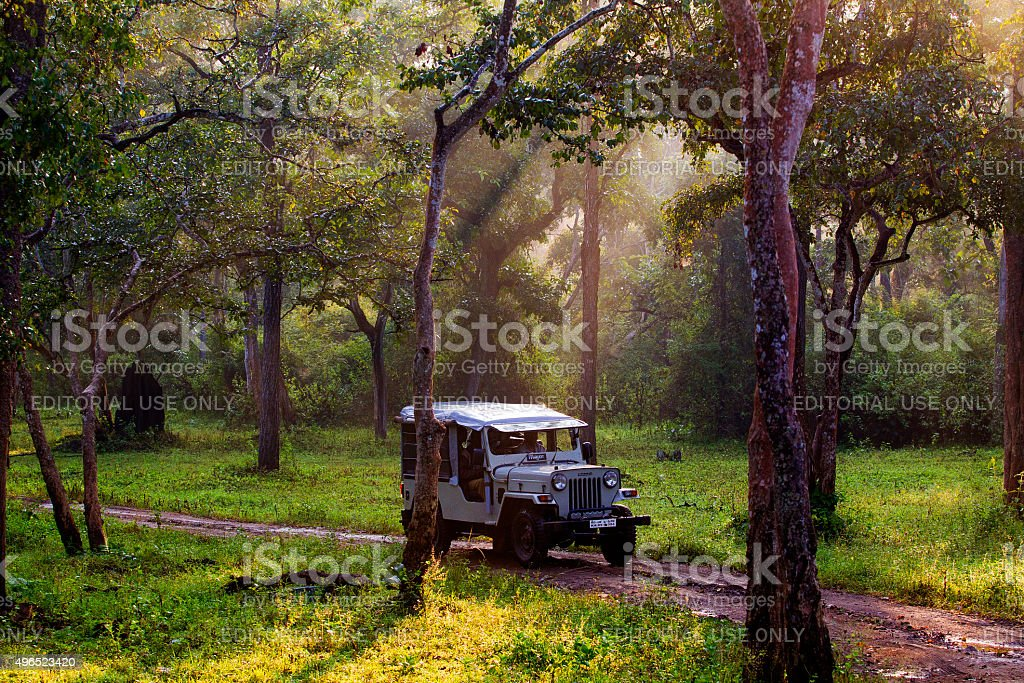 Safari jeep early in the morning at Nagarahole National Park stock photo