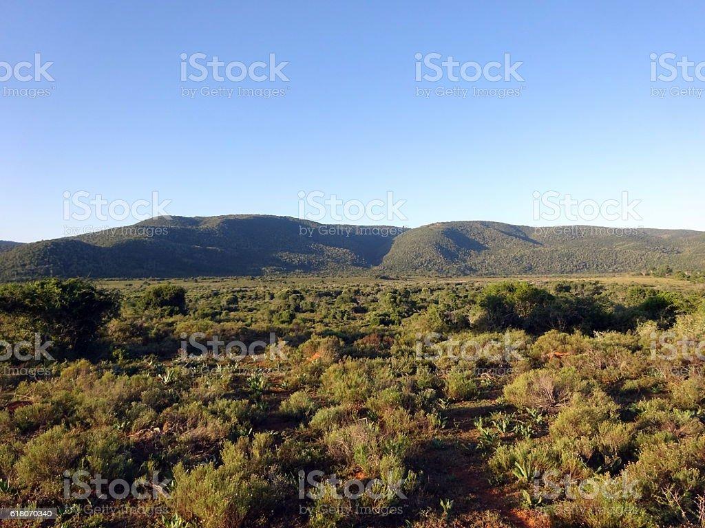 Safari landscape stock photo