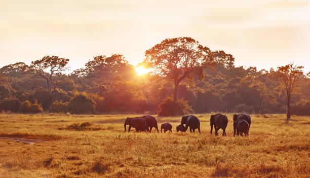 safari – Foto