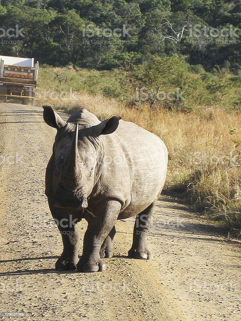 Safari royalty-free stock photo