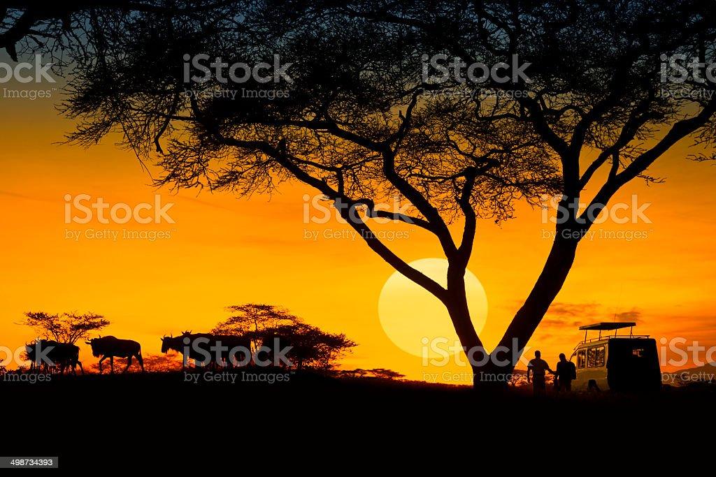 safari stock photo