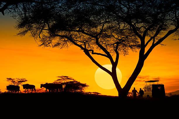 safari - safari animals stock photos and pictures