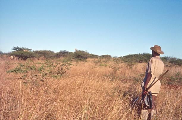 Safari Ranger, Kruger National Park Kruger National Park, South Africa, 1973. A safari ranger observes a giraffe in Kruger National Park. park ranger stock pictures, royalty-free photos & images