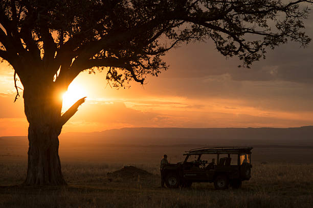 Safari scene in Kenya Safari scene in Kenya.  A large acacia tree hides the setting sun over the plains of the Masai Mara, Kenya masai mara national reserve stock pictures, royalty-free photos & images
