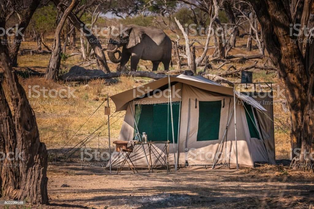 Safari tent in foreground with African elephant grazing in the background. Botswana. stock photo