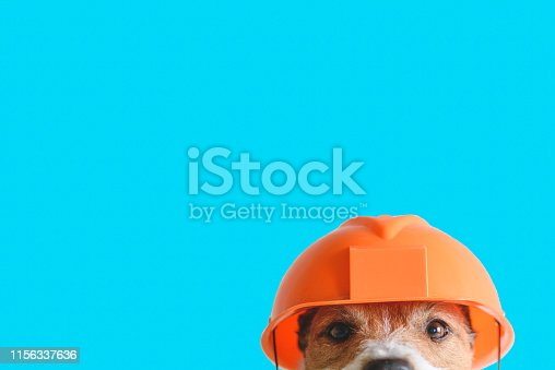 istock Safety, construction, DIY concept - cute dog in hard hat on color background 1156337636