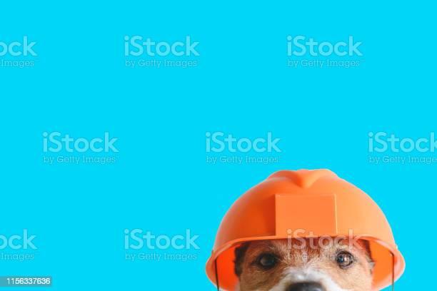 Safety construction diy concept cute dog in hard hat on color picture id1156337636?b=1&k=6&m=1156337636&s=612x612&h=othsp6zwf5mevmfjo663stxivgoswmvrlgct4ggxduc=
