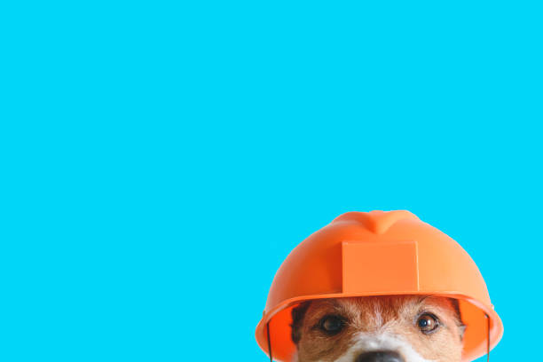 Safety, construction, DIY concept - cute dog in hard hat on color background Dog as funny builder studio shot pet clothing stock pictures, royalty-free photos & images