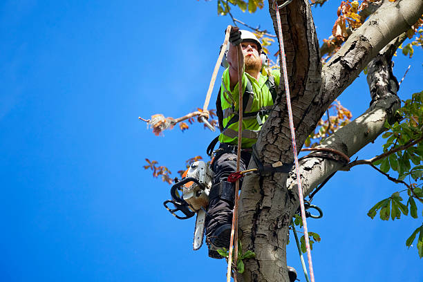 safety first for tree surgeon tree felling - tree surgeon stock photos and pictures