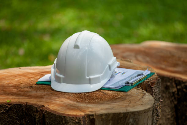safety helmet and with plan documents report on big Stump wood in green park or forest stock photo