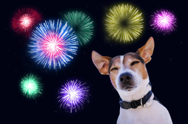 Safety of pets during fireworks concept picture id896285604?b=1&k=6&m=896285604&s=612x612&w=0&h=gwjhcjpvbiht0jt2x hsdepbv ox r4g0fr1 si8hq4=