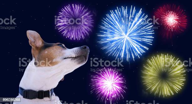 Safety of pets during fireworks concept picture id896286268?b=1&k=6&m=896286268&s=612x612&h=g3syphepavjpzu4ftzlafzft4buy5gpbg0mi74mxbik=