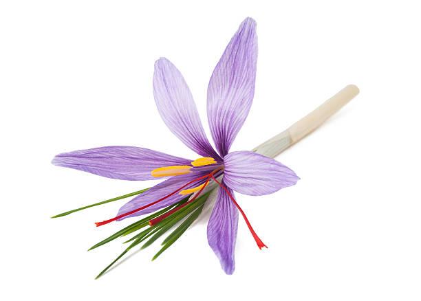 saffron flower - carpel bildbanksfoton och bilder