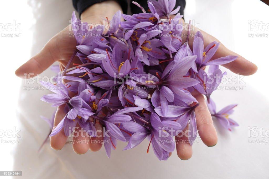 saffron Blumen - Lizenzfrei Baumblüte Stock-Foto