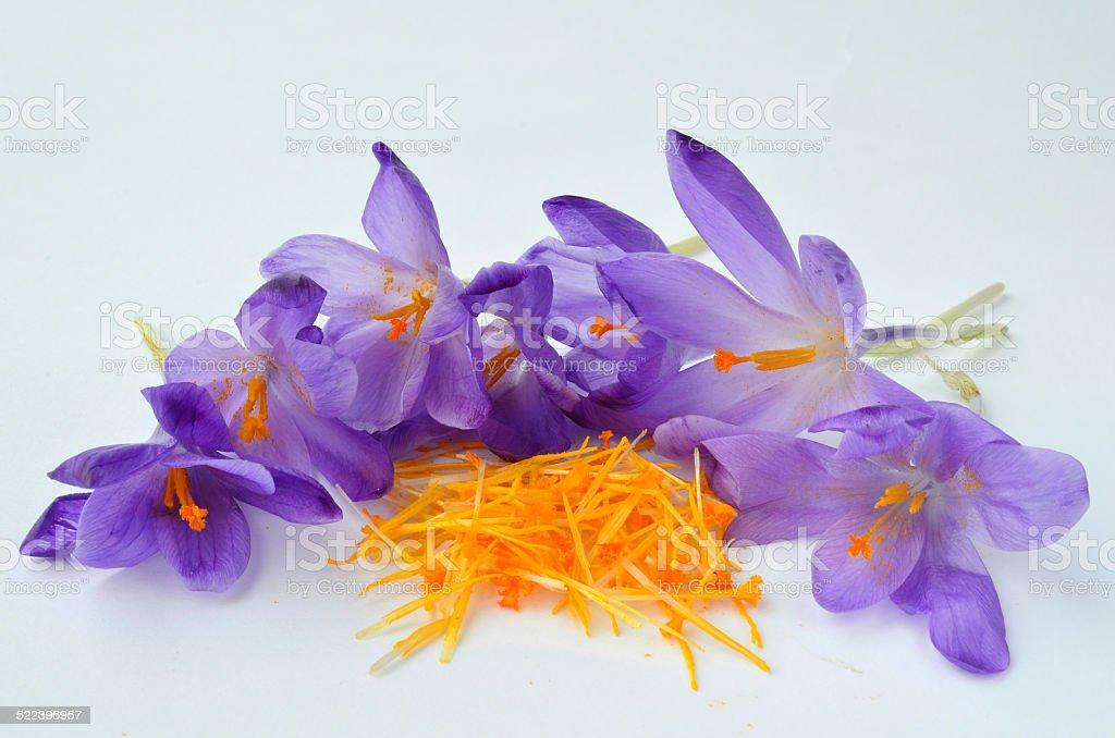 Saffron spice stock photo
