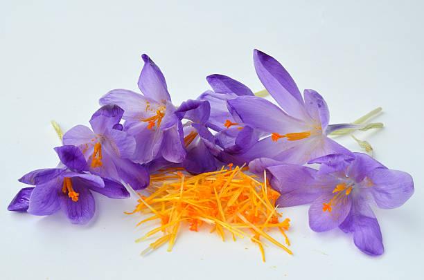 saffron spice - saffron on white bildbanksfoton och bilder