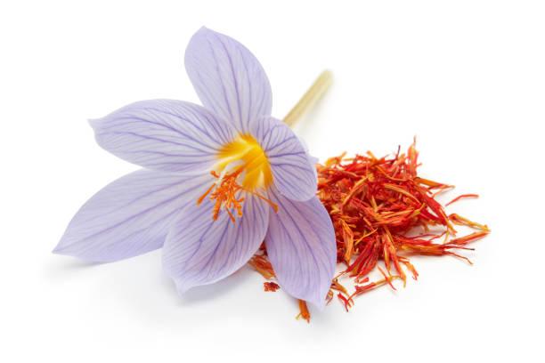saffran med krokus blomma isolerad på vitt - saffron on white bildbanksfoton och bilder
