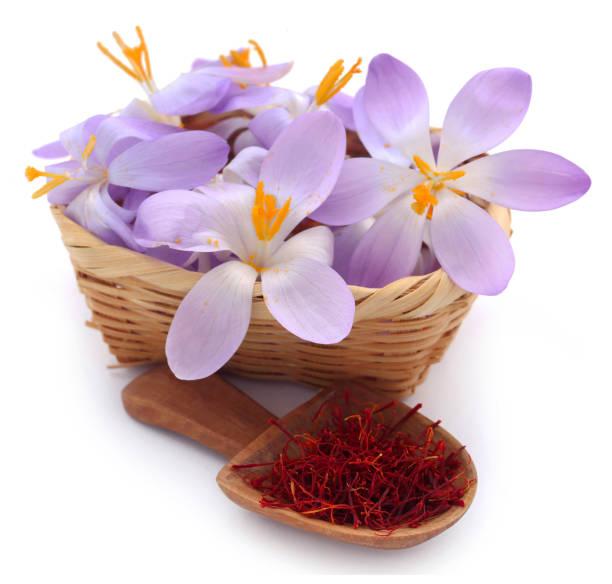 saffran med krokus blomma - saffron on white bildbanksfoton och bilder