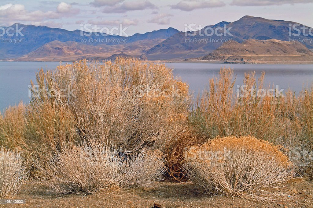Sage Brush and Pyramid Lake stock photo