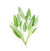 Sage herb isolated on white background