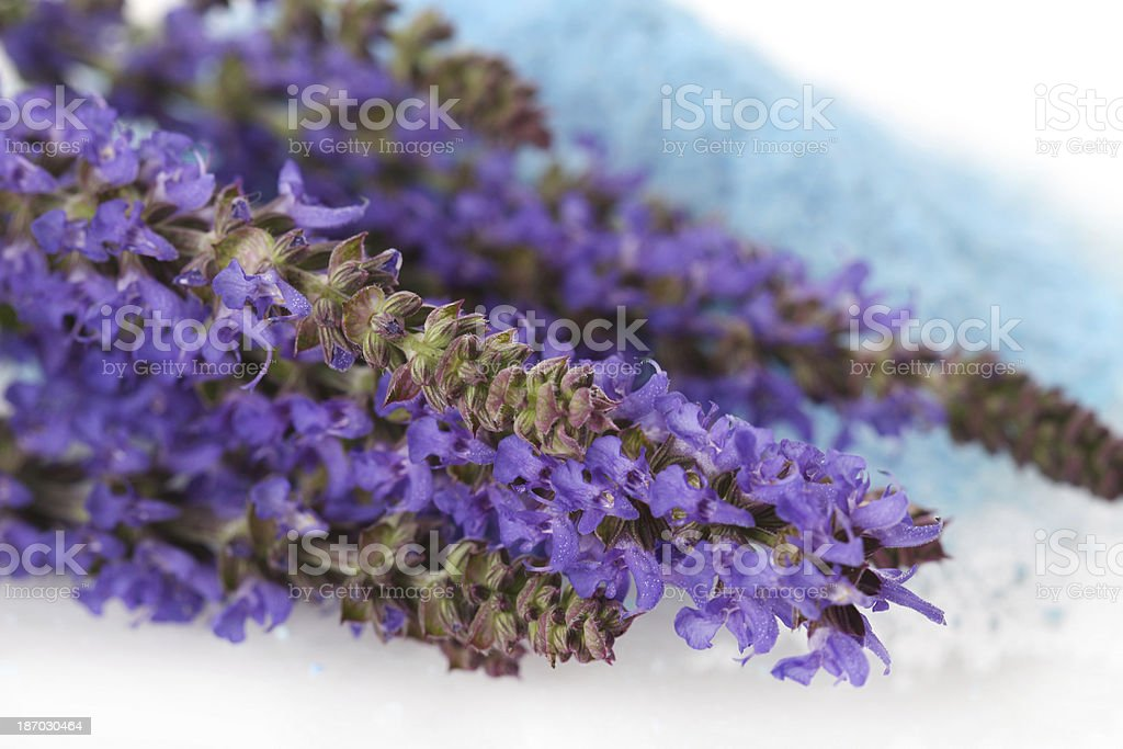 Sage royalty-free stock photo