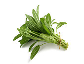 Fresh tied sage bunch isolated on white background