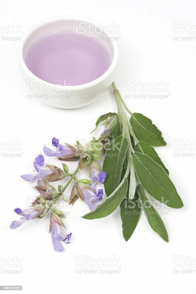 Sage plant royalty-free stock photo