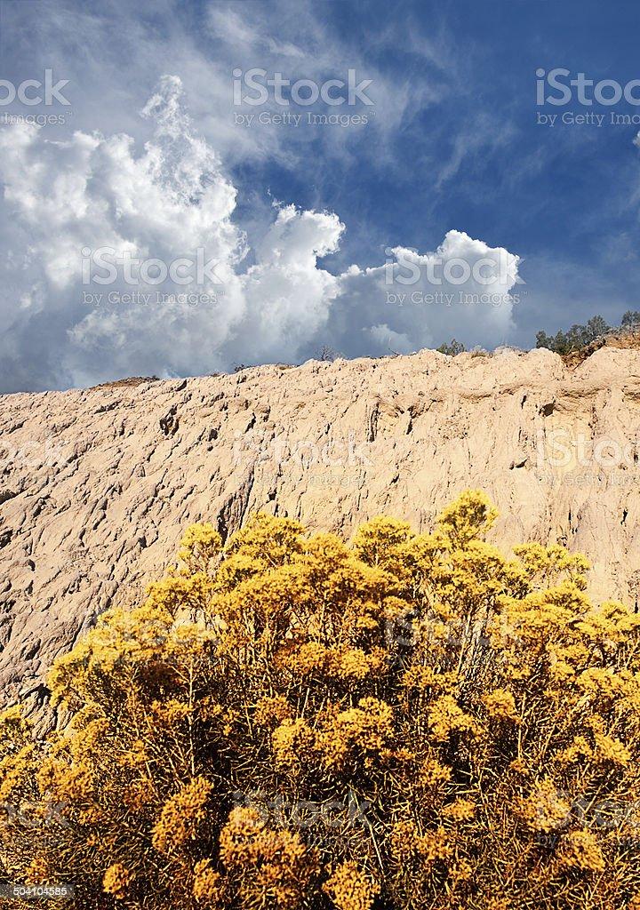 Sagebrush - Chamisa stock photo