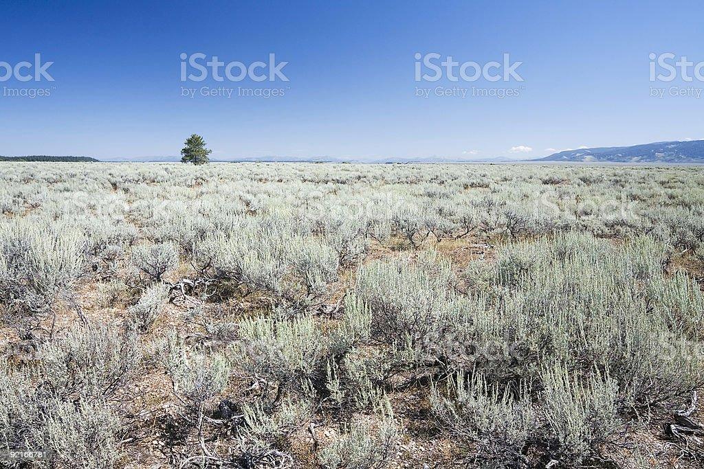 Sagebrush Landscape, Wyoming royalty-free stock photo
