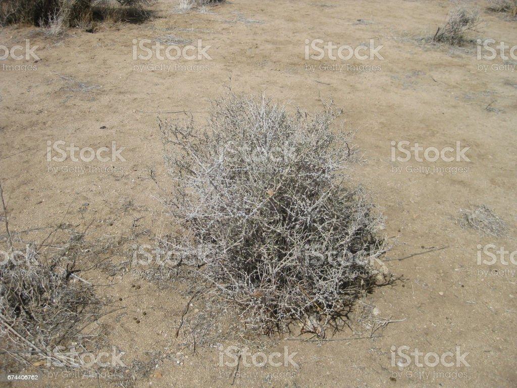 sagebrush lying on desert ground stock photo