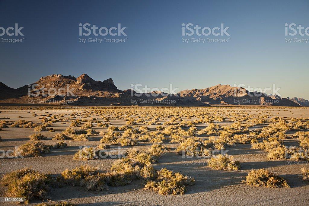 Sagebrush on the landscape stock photo