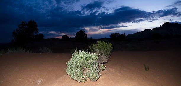 Sagebrush Under Twilight Kodachrome Sky stock photo