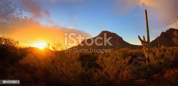 Saguaro Sunset and Mountain Panorama in the Sonoran Desert