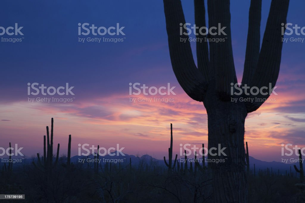 Saguaro and Violet Sky stock photo