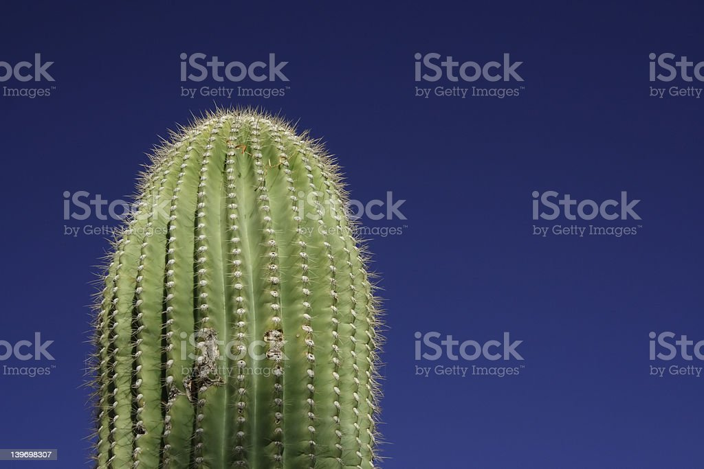 Saguaro Cactus and Blue Sky royalty-free stock photo