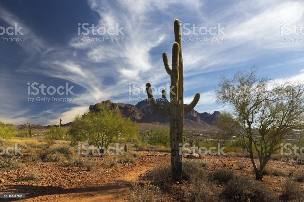 Saguaro Cactus and Distant Superstition Mountains in Lost Dutchman State Park Arizona stock photo