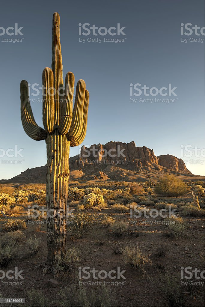Saguaro Cactus and Superstition Mountains stock photo