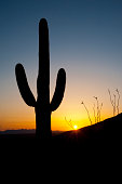Saguaro cactus silhouette and scenic Arizona desert landscape with dramatic sky at sunset in Sonoran Desert National Monument.