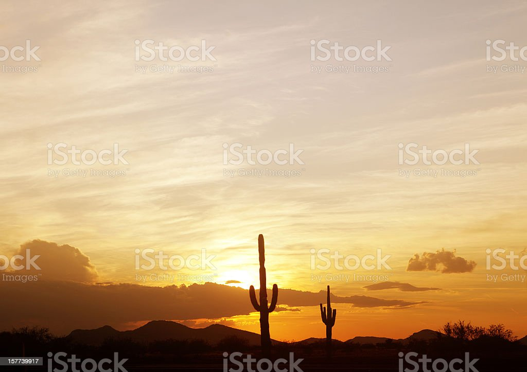 Saguaro Cactus at sunset royalty-free stock photo