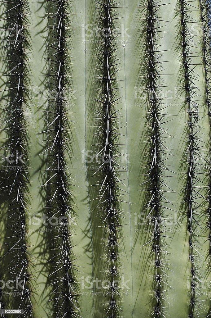 saguaro cactus close-up, Carnegiea gigantea royalty-free stock photo