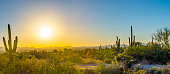 Saguaro cactus mountain with setting sun