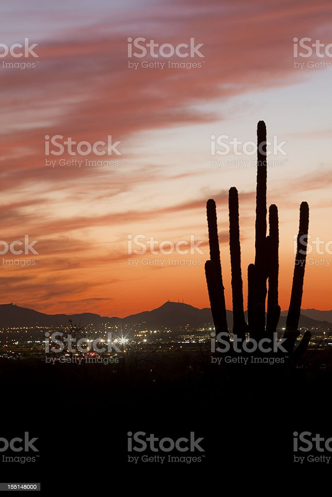 Saguaro Cactus Silhouette At Dusk royalty-free stock photo