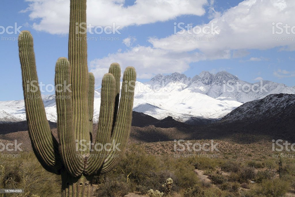 Saguaro Cactus with Four Peaks royalty-free stock photo