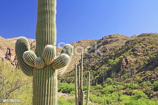 Saguaro Cactus with Mount Lemmon in the background in Tucson, Arizona, USA in the Santa Catalina Mountains located in the Coronado National Forest with blue sky copy space.