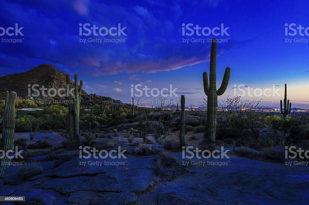Saguaro Catcus at Sunset stock photo