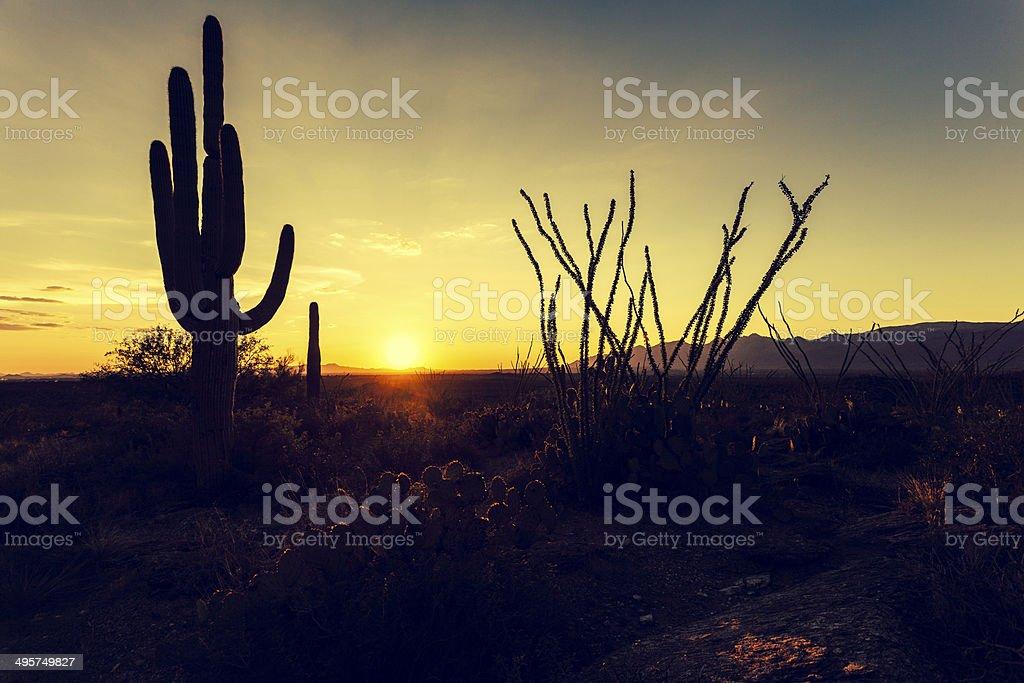 Saguaro National Park at Sunset, USA royalty-free stock photo