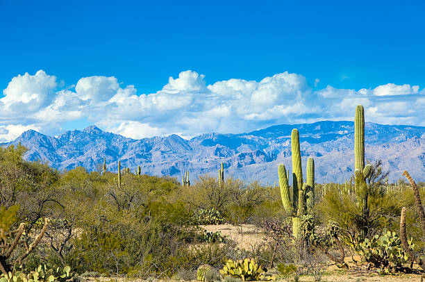 Saguaro National Park East and Rincon Mountains Under Blue Sky stock photo