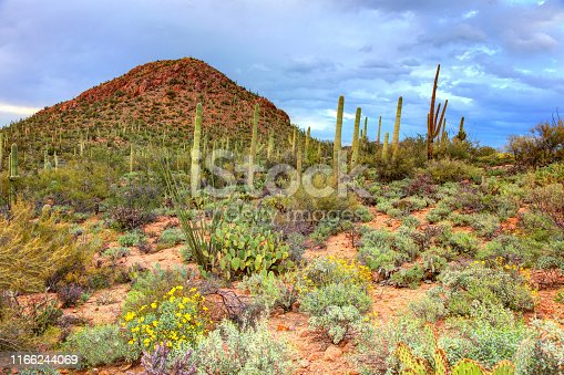 Saguaro National Park is an American national park in Pima County, southeastern Arizona.