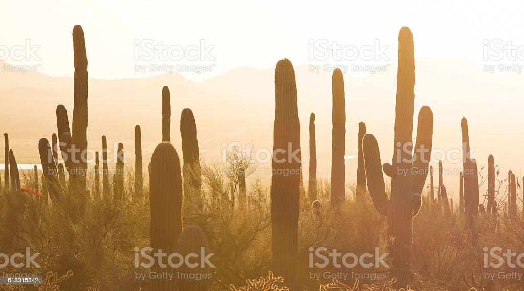 Saguaro National Park stock photo